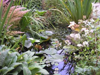 Waterzuiverende planten vijver
